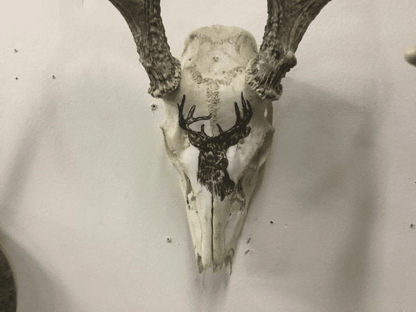 Hand Painted deer on skull